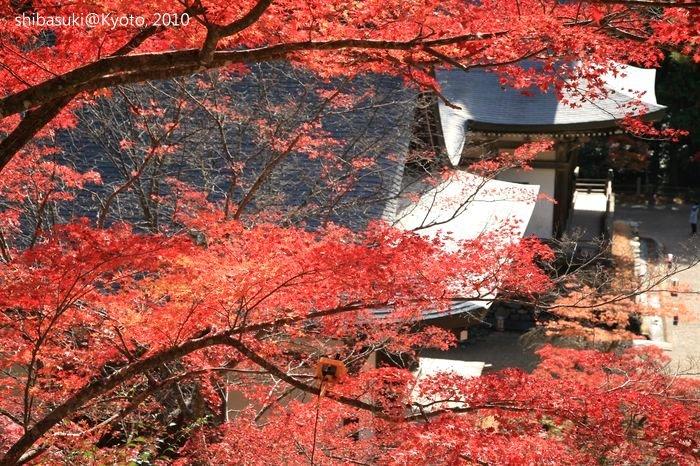 20101116_Kyoto-123_高雄神護寺_1.JPG