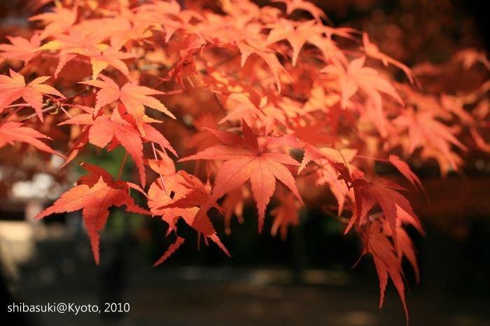 20101116_Kyoto-133_高雄神護寺_1.JPG