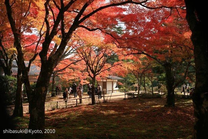 20101116_Kyoto-146_高雄神護寺_1.JPG