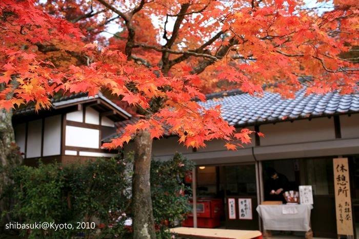 20101116_Kyoto-163_高雄神護寺_1.JPG
