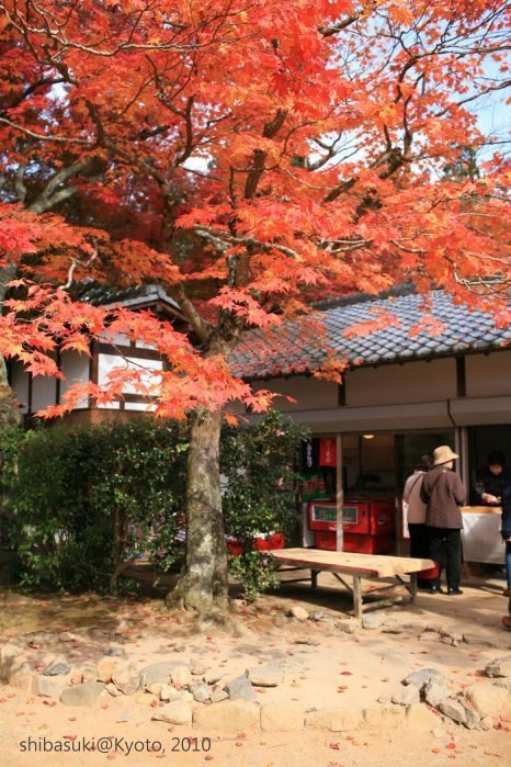 20101116_Kyoto-170_高雄神護寺_1.JPG