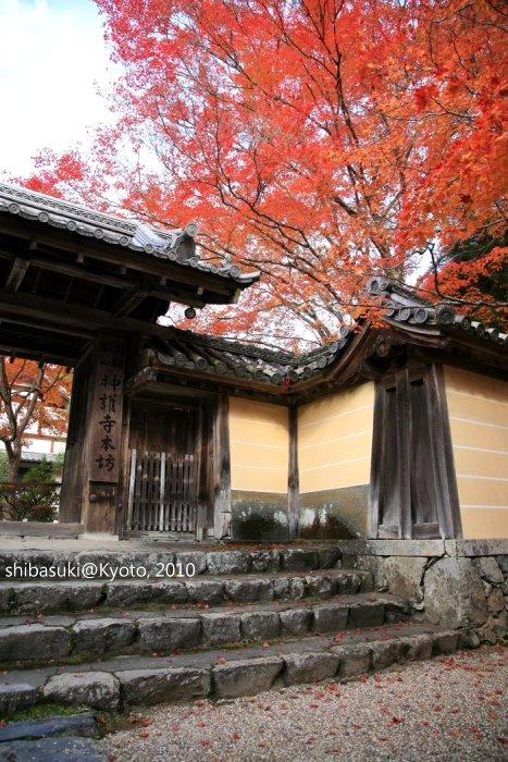 20101116_Kyoto-195_高雄神護寺_1.JPG
