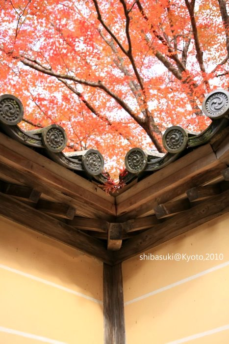 20101116_Kyoto-197_高雄神護寺_1.JPG