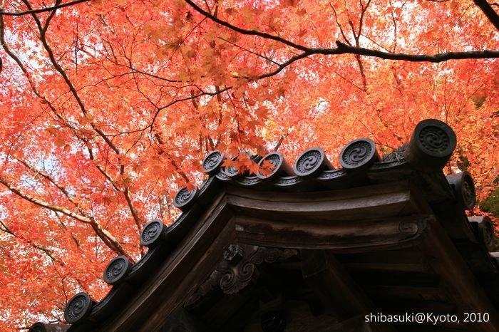 20101116_Kyoto-201_高雄神護寺_1.JPG