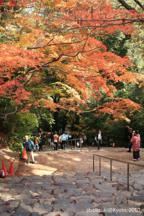 20101116_Kyoto-204_高雄神護寺_1.JPG