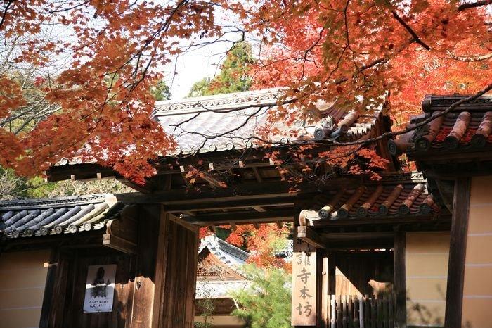 20101116_Kyoto-205_高雄神護寺_1.JPG