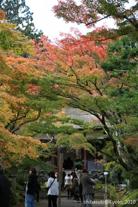 20101118_Kyoto-41_常寂光寺_1.JPG