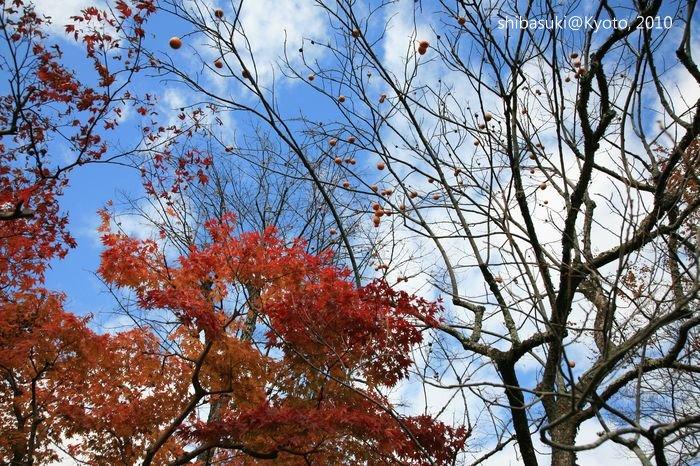 20101118_Kyoto-65_落柿舍_1.JPG