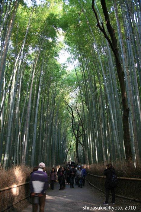 20101118_Kyoto-67_嵯峨野竹林_1.JPG