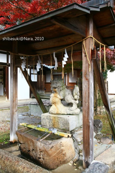 20101120_Nara-79_手向山八幡宮_1.JPG