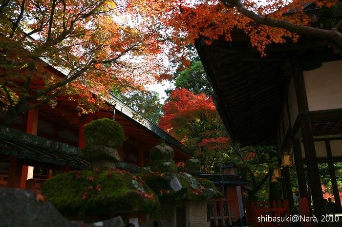 20101120_Nara-84_手向山八幡宮_1.JPG