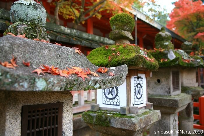 20101120_Nara-88_手向山八幡宮_1.JPG