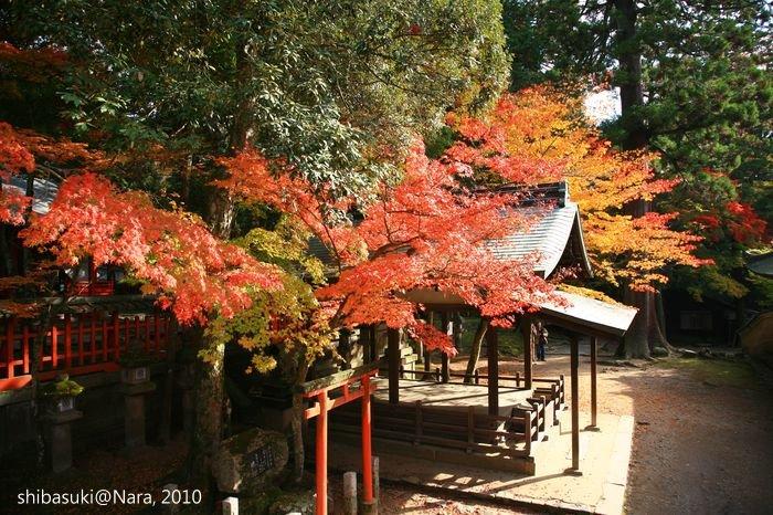 20101120_Nara-90_手向山八幡宮_1.JPG