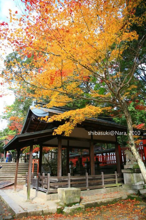20101120_Nara-95_手向山八幡宮_1.JPG