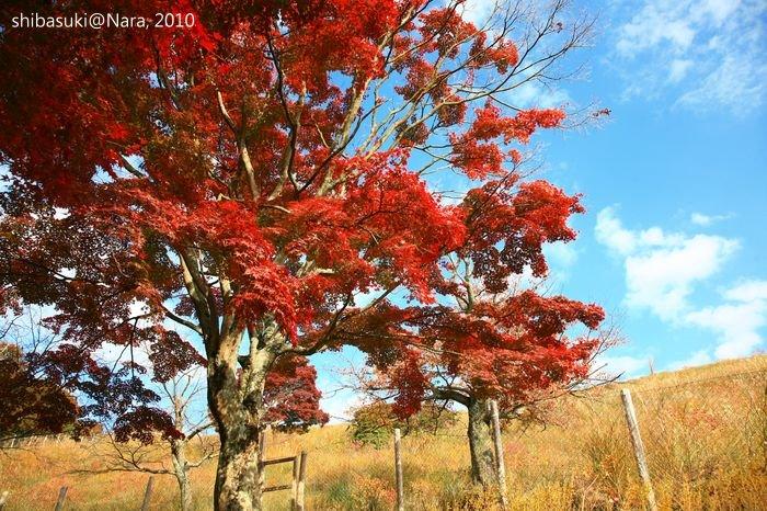 20101120_Nara-109_若草山_1.JPG