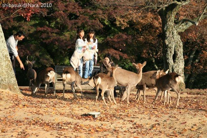 20101120_Nara-137_若草山山頂_1.JPG