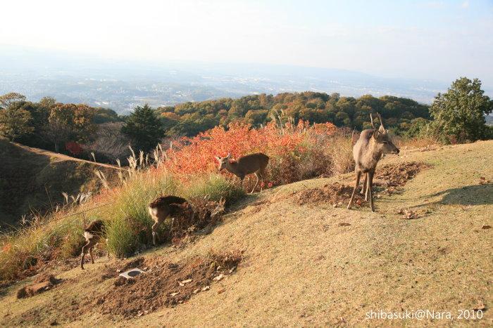 20101120_Nara-156_若草山山頂_1