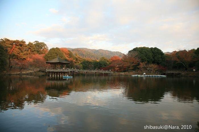20101120_Nara-175_荒池_1