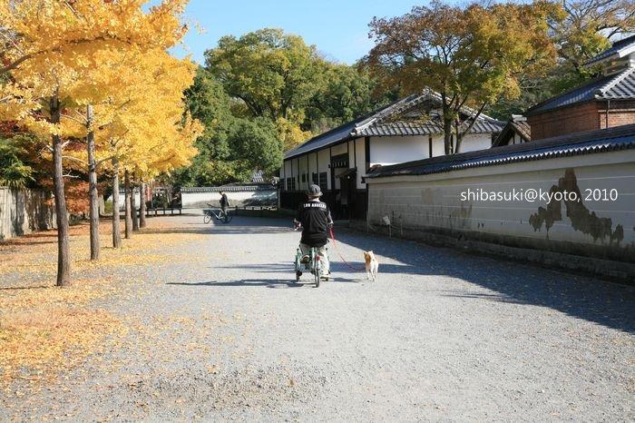 20101121_Kyoto-47_京都御苑_1.JPG
