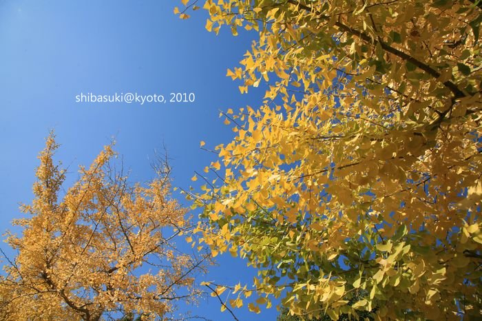 20101121_Kyoto-48_京都御苑_1.JPG