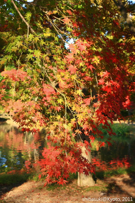 20101121_Kyoto-76_京都府立植物園_1.jpg
