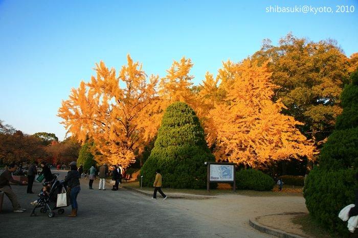 20101121_Kyoto-86_京都府立植物園_1.JPG