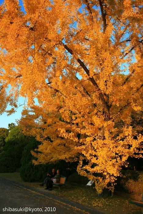 20101121_Kyoto-87_京都府立植物園_1.JPG