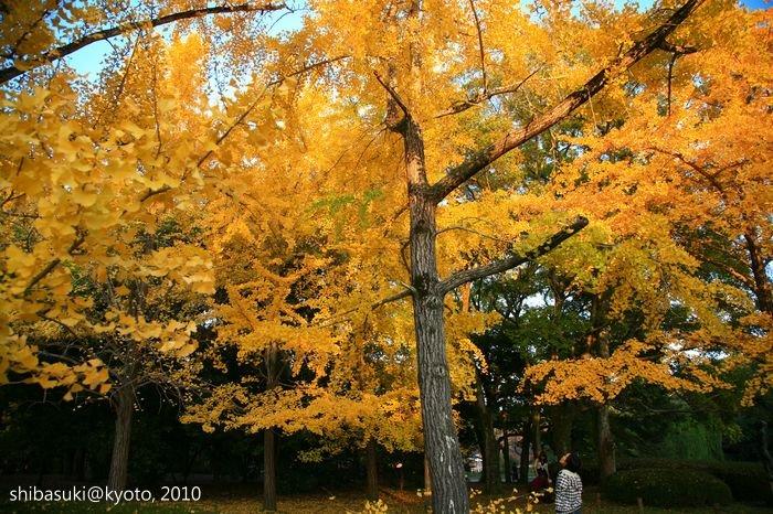 20101121_Kyoto-102_京都府立植物園_1.JPG