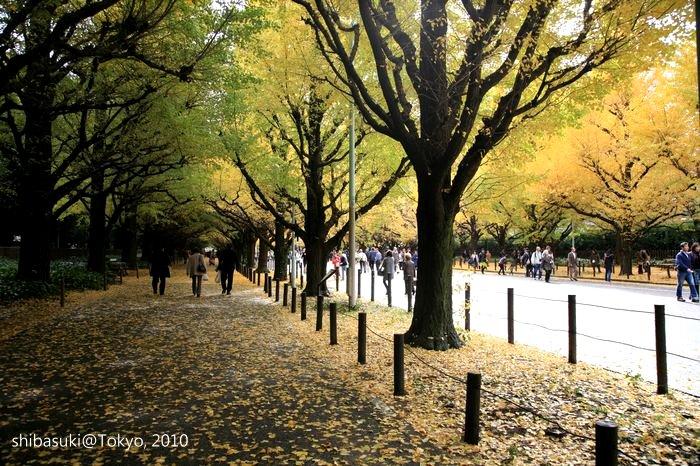 20101123_Tokyo-64_明治神宮外苑_1