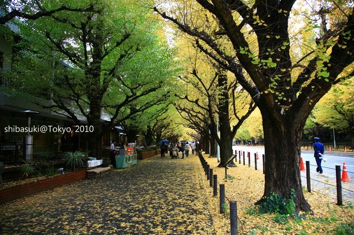 20101123_Tokyo-2_明治神宮外苑_1