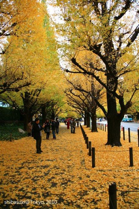 20101123_Tokyo-29_明治神宮外苑_1