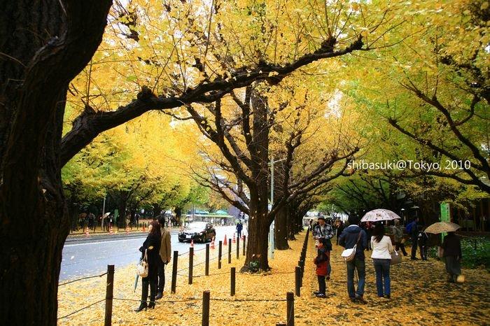 20101123_Tokyo-34_明治神宮外苑_1