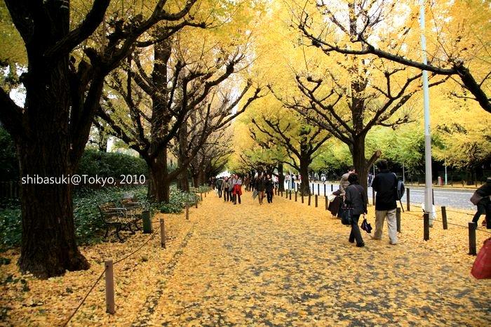 20101123_Tokyo-43_明治神宮外苑_1