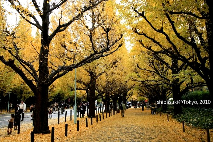 20101123_Tokyo-50_明治神宮外苑_1