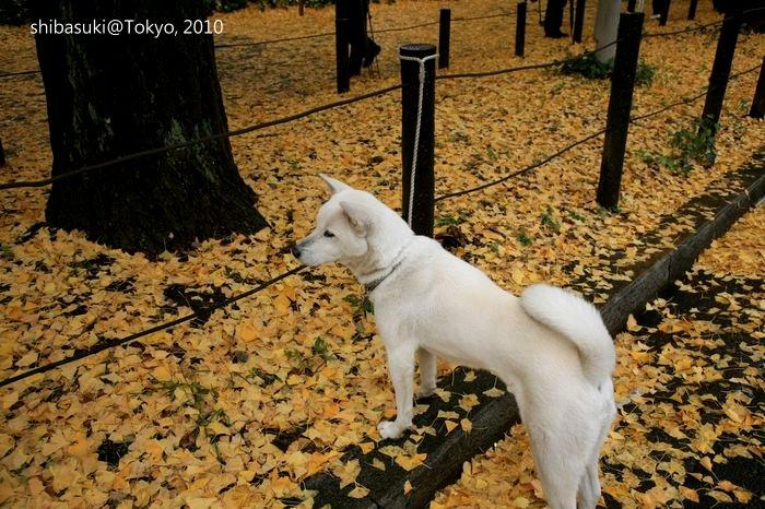 20101123_Tokyo-51_明治神宮外苑_1