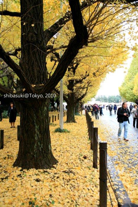 20101123_Tokyo-54_明治神宮外苑_1