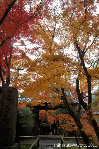 20111129_Kyoto-90_光悅寺_1.JPG
