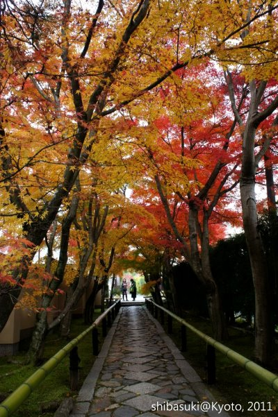 20111129_Kyoto-97_光悅寺_1.JPG