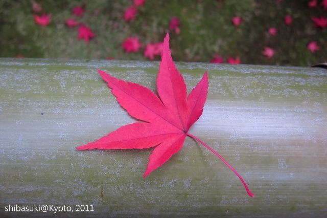 20111129_Kyoto-101_光悅寺_1.JPG