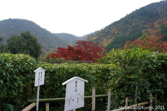 20111129_Kyoto-116_光悅寺_1.JPG
