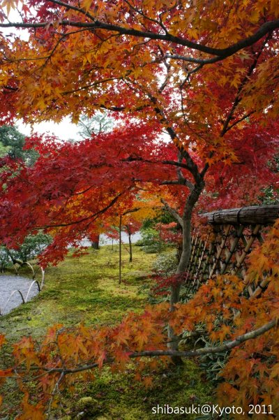 20111129_Kyoto-121_光悅寺_1.JPG
