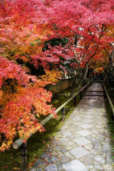 20111129_Kyoto-129_光悅寺_1.JPG