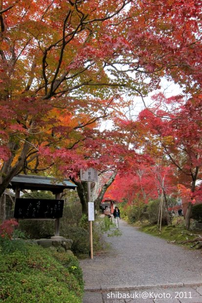 20111129_Kyoto-165_常照寺_1.JPG