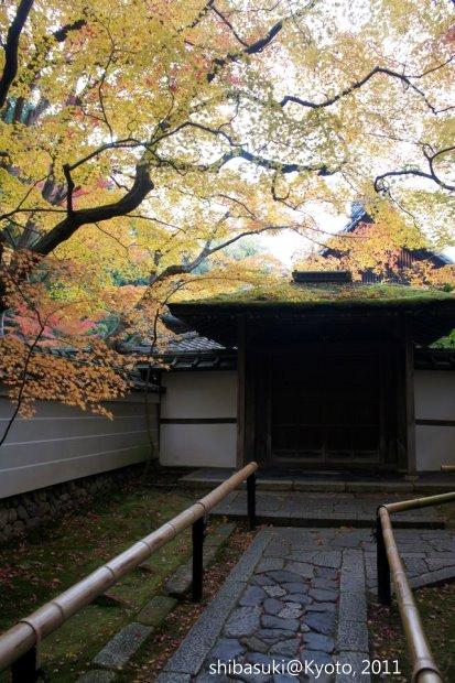 20111129_Kyoto-202_大德寺高桐院_1.JPG