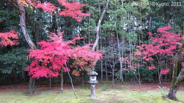 20111129_Kyoto-208_大德寺高桐院_1.JPG