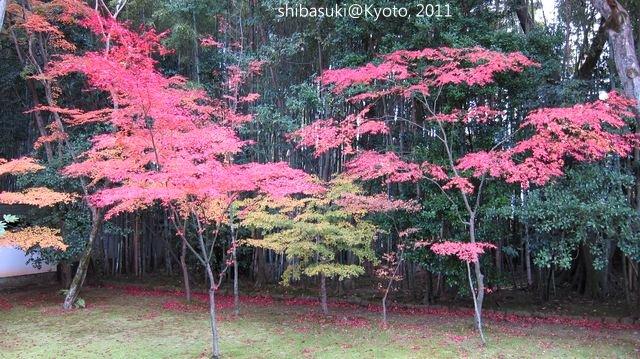 20111129_Kyoto-212_大德寺高桐院_1.JPG