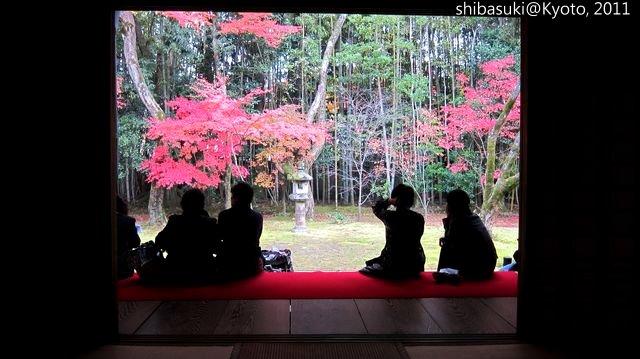 20111129_Kyoto-213_大德寺高桐院_1.JPG