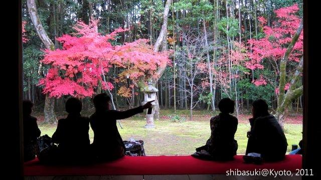 20111129_Kyoto-215_大德寺高桐院_1.JPG