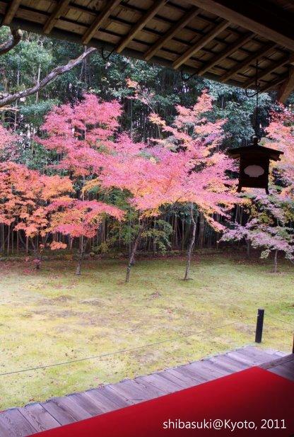 20111129_Kyoto-226_大德寺高桐院_1.JPG