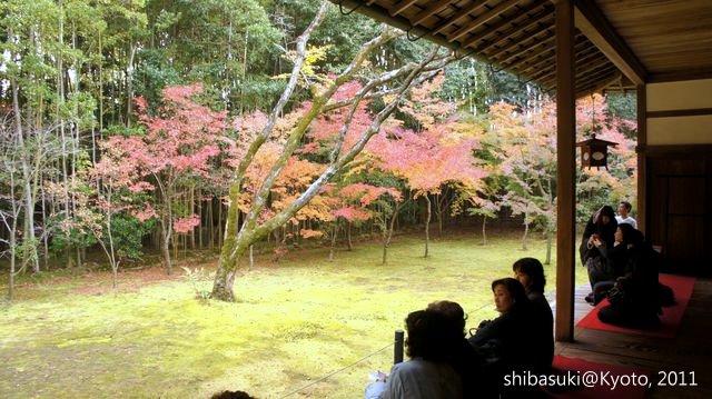 20111129_Kyoto-228_大德寺高桐院_1.JPG